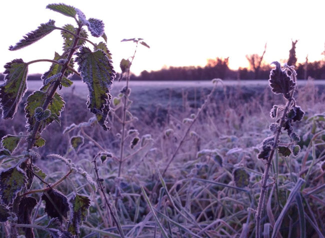 Wintry scene with morning colours of pale purple and orange.
