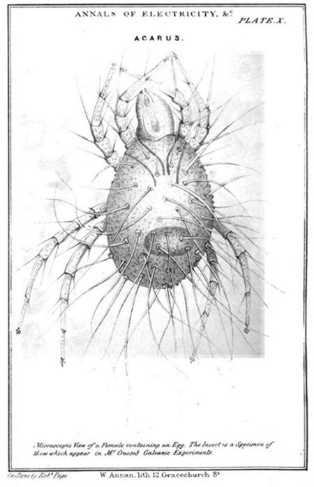 Sketch of a bug.