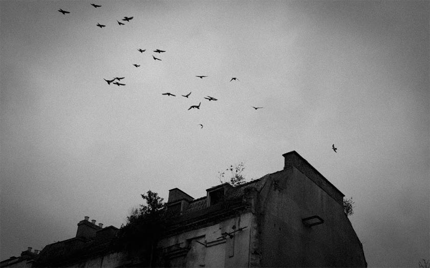 Birds fly above a rooftop.
